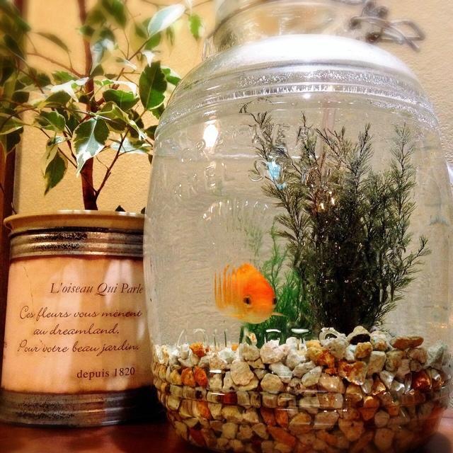 夏向きのインテリアに涼しげな金魚鉢を取り入れてみませんか?のサムネイル画像