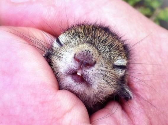 キュン死注意!瞬殺危険!反則級におもしろくて、かわいい動物たちのサムネイル画像