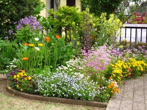 丈夫で育てやすい花を知りたい!庭に季節の花を取り入れようのサムネイル画像