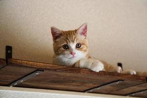 猫ちゃんが喜ぶ!DIYで猫用インテリアを手作りしてみましょうのサムネイル画像