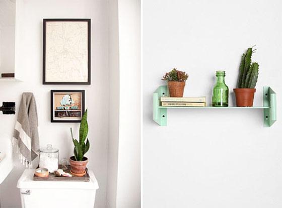 トイレに植物を置いて風水効果アップ!おすすめの植物もご紹介のサムネイル画像