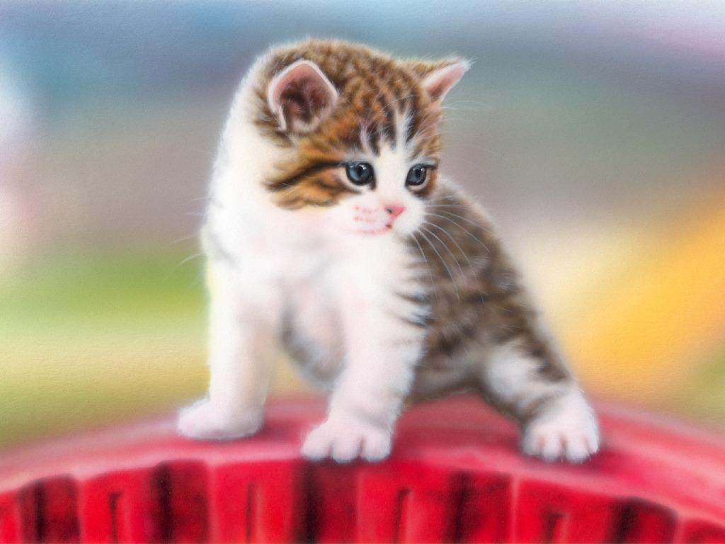 可愛い猫と快適に過ごすためには?臭いの予防と対策をご紹介します!のサムネイル画像