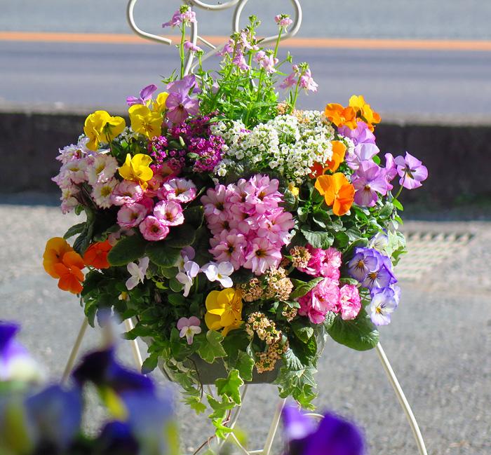 【ガーデニング】秋の寄せ植えに向いているお花をご紹介しますのサムネイル画像