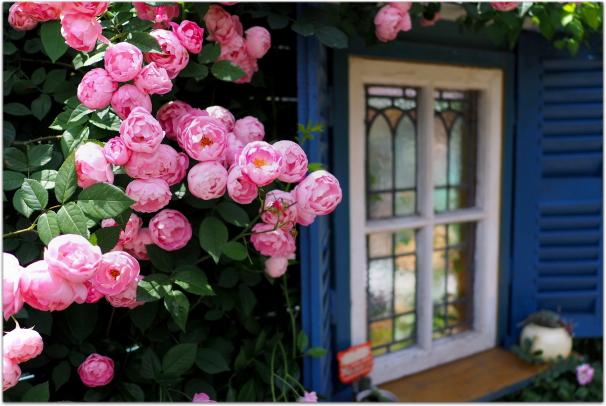 芳しいバラの香りに包まれた素敵なお庭で、特別な時間を過ごしたいのサムネイル画像
