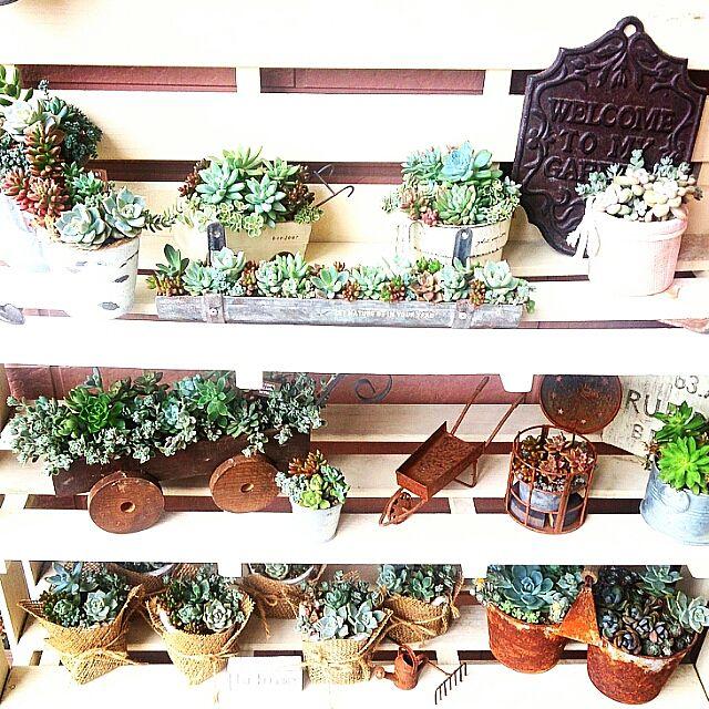 【ガーデニング】狭い空間でも楽しめる庭づくりのポイントとは?のサムネイル画像