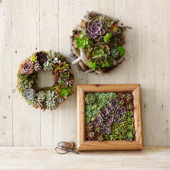 コツさえつかめば簡単!多肉植物の寄せ植えをおしゃれに作るコツのサムネイル画像