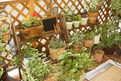 お庭やベランダにラティスを取り付けておしゃれなアクセントにのサムネイル画像