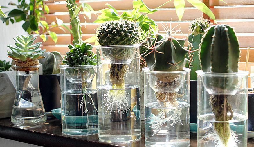 清潔だからキッチンやテーブルにも!!土がいらない観葉植物たちのサムネイル画像