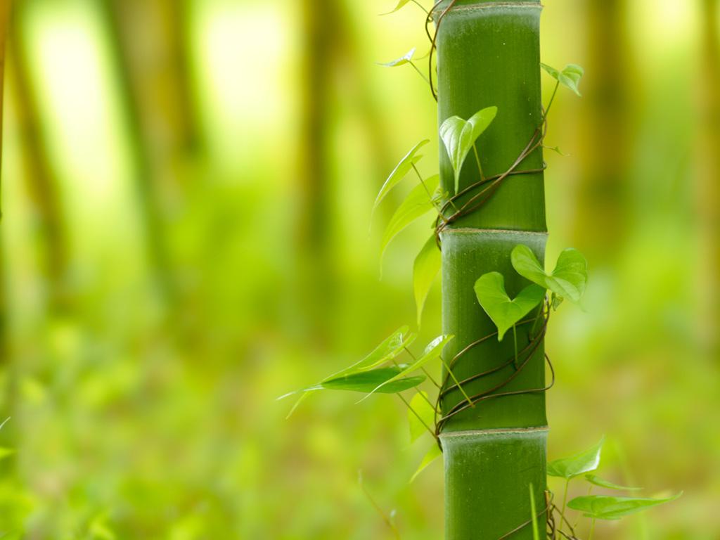 うちの庭を和風の庭にしたい!竹のガーデニングの注意点などご紹介のサムネイル画像