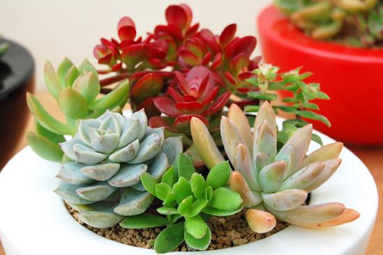女子に大人気!多肉植物のお洒落でかわいいインテリア実例画像★のサムネイル画像