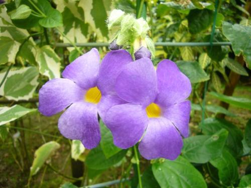 【植物博士になろう】8月に見られる植物をご紹介しちゃいます!のサムネイル画像