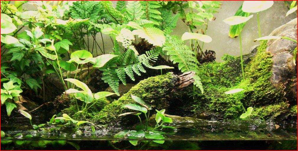 自分だけの特別な癒しの空間アクアテラリウムとその植物の魅力のサムネイル画像