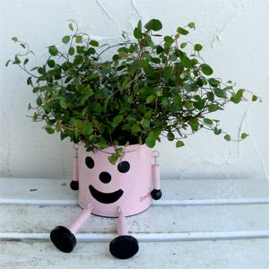 日陰でもあきらめない!日陰に強い植物でガーデニングを楽しむのサムネイル画像