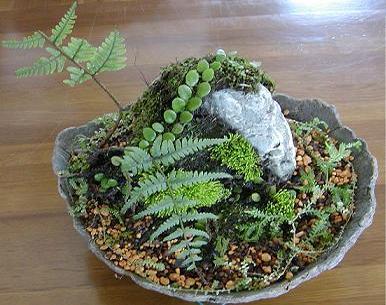 苔の寄せ植えが素敵!苔玉・苔テラリウムを作ってみませんか?のサムネイル画像