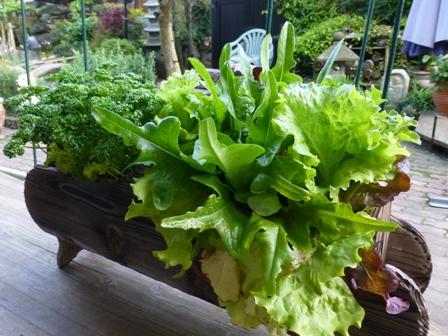【初心者】園芸初心者でも簡単に作れる植物をご紹介します!【園芸】のサムネイル画像