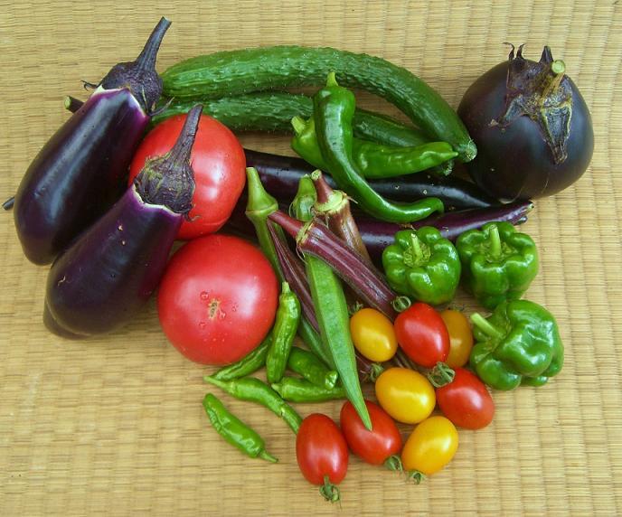 【プランターでもできる】ガーデニングで野菜作りどうですか?のサムネイル画像
