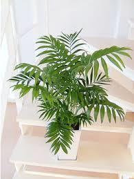 冬に観葉植物を育てたいなら、寒さに強い観葉植物がおススメ!のサムネイル画像