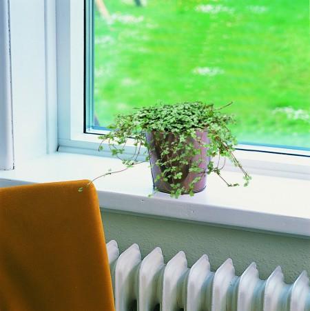 初心者でも育てやすい!小さいサイズの観葉植物をまとめてみました☆のサムネイル画像