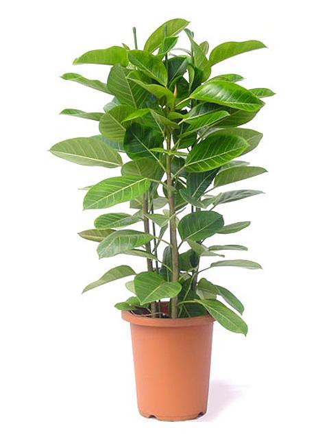 観葉植物の水やりの方法をご紹介☆どんどん成長させてみませんか?のサムネイル画像