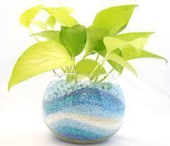 観葉植物の水耕栽培(ハイドロカルチャー)なら土いらずで栽培できる!のサムネイル画像