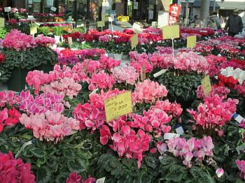 【画像あり】≪ガーデニング≫冬のガーデニングにオススメの花のサムネイル画像