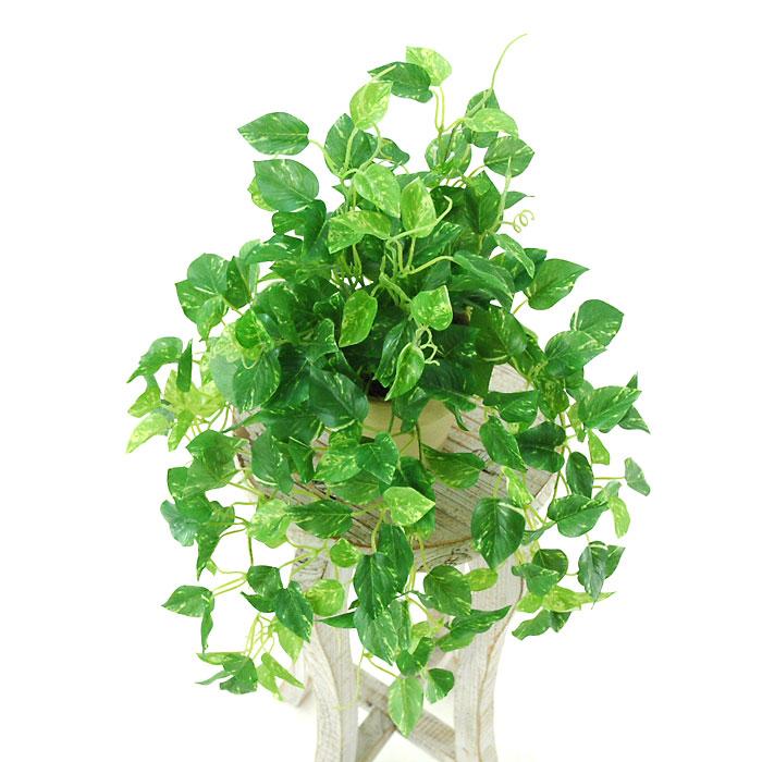 【インテリアに困ったら】日陰でも楽しめる耐陰性のある観葉植物3選のサムネイル画像