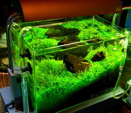 熱帯魚を飼うときには絶対にいる水草の選び方や植え方まとめのサムネイル画像