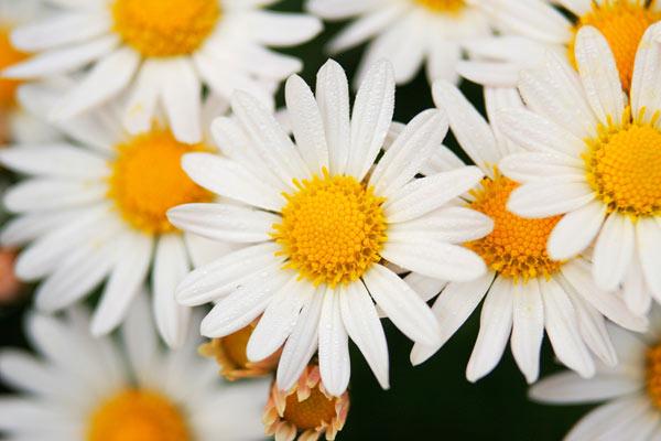 ガーデニング初心者でも超簡単に栽培できちゃう花3選をご紹介のサムネイル画像