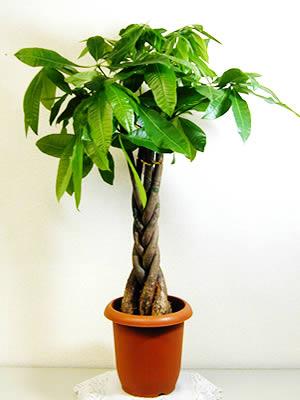 【必見】観葉植物が枯れてしまったときの原因と枯れない対策のサムネイル画像