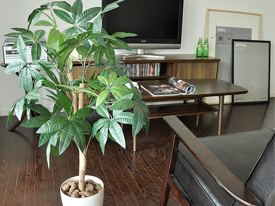 部屋を華やかに彩る観葉植物の魅力に迫ってみる!【部屋に緑を】のサムネイル画像