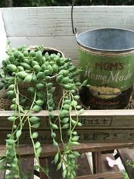 ガーデニング初心者に観葉植物はおススメ!育てやすくて管理しやすいのサムネイル画像