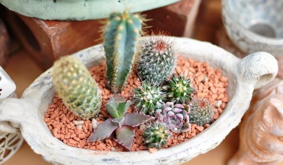 ミニサボテンの寄せ植えがカワイイ!自分でも作ってみませんか?のサムネイル画像