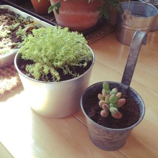100均集合!植物を雑貨としておしゃれに可愛いく飾ろう♪♪ のサムネイル画像