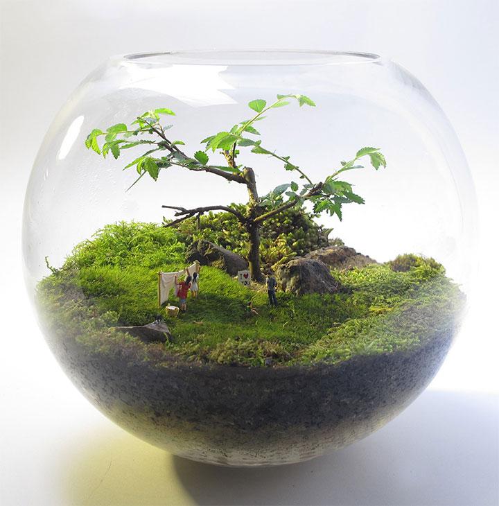 テラリウムは、陸上の生物を飼育することで、容器はガラス製ですのサムネイル画像