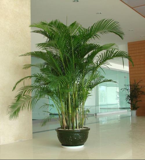 室内でも植物を育てよう!室内でも育てることのできる植物をご紹介☆のサムネイル画像