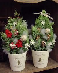 コニファーの鉢植えをご紹介!冬のおススメはクリスマス仕立てのサムネイル画像