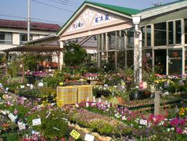 園芸&ガーデニングには違いがあった!詳しく調査してみましたのサムネイル画像
