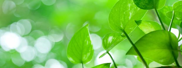 【つい枯らしてしまう】観葉植物が元気がない時の原因と対処法を知るのサムネイル画像