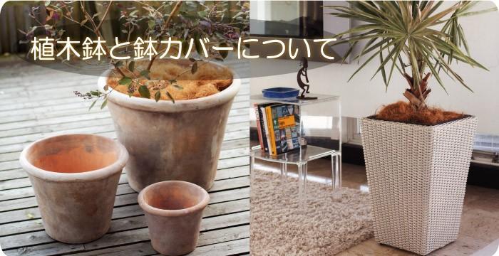 観葉植物は、植木鉢に植えて、鑑賞していることが多いでしょう ♪のサムネイル画像