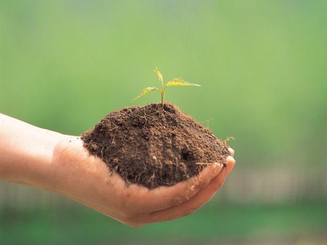 自分でできる!?コンテナガーデニングの土作りに挑戦してみよう!!のサムネイル画像