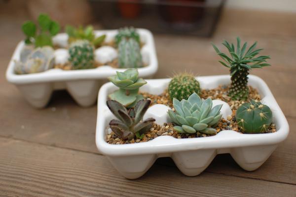 【お洒落】多肉植物をいろんな入れ物で育ててみよう!【インテリア】のサムネイル画像