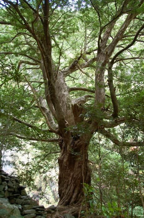木には様々な種類がある それぞれの木の違いとは?価格は?のサムネイル画像