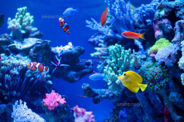 熱帯魚を飼育したい!でも何から揃える?熱帯魚の水槽セットについてのサムネイル画像