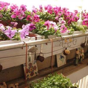 マンションのベランダでもできる!植物の栽培方法と最適な植物の紹介のサムネイル画像