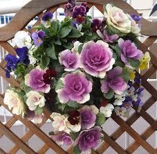 お正月飾りの寄せ植えをご紹介!お正月をハンギングバスケットで飾るのサムネイル画像