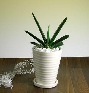 観葉植物が空気清浄機?観葉植物を置いて空気をきれいに保とう!のサムネイル画像