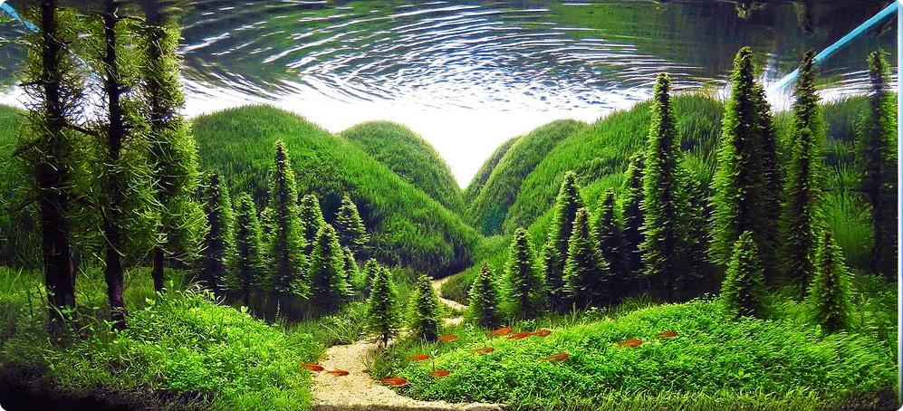 水槽に水生植物の世界を表現しよう!美しいアクアリウムの世界とは?のサムネイル画像