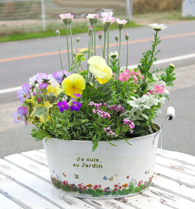 ガーデニング初心者にもできる!?植物の寄せ植えを楽しむ方法のサムネイル画像