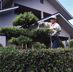 プロが語る!庭木の剪定を依頼したときの相場、自力でやる方法などのサムネイル画像