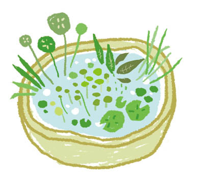 【ベランダを緑で彩ろう】ベランダビオトープの魅力に迫る!のサムネイル画像